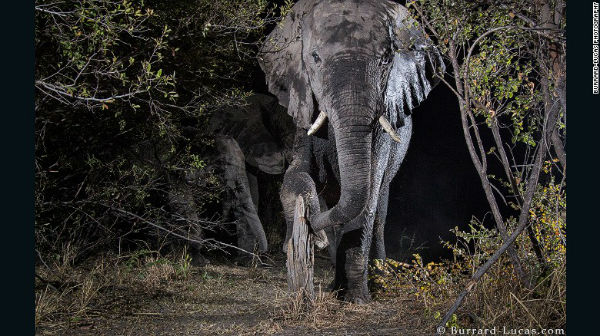 awesome elephant at night