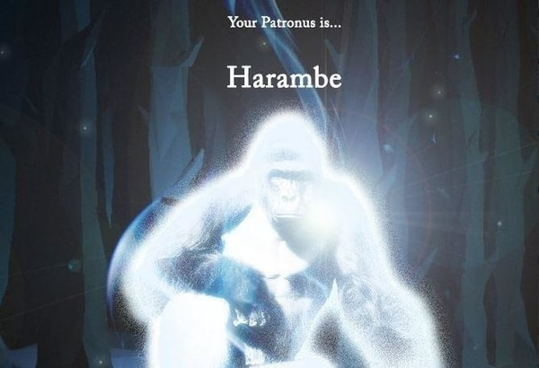 harambe as a patronus