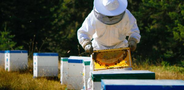 beehive internet of things