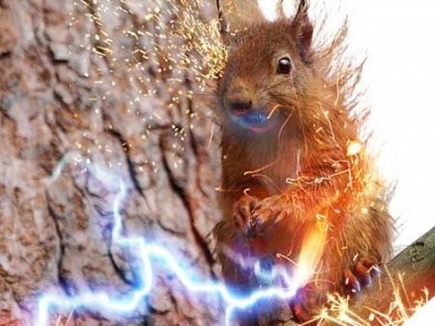 squirrel chewing on power line